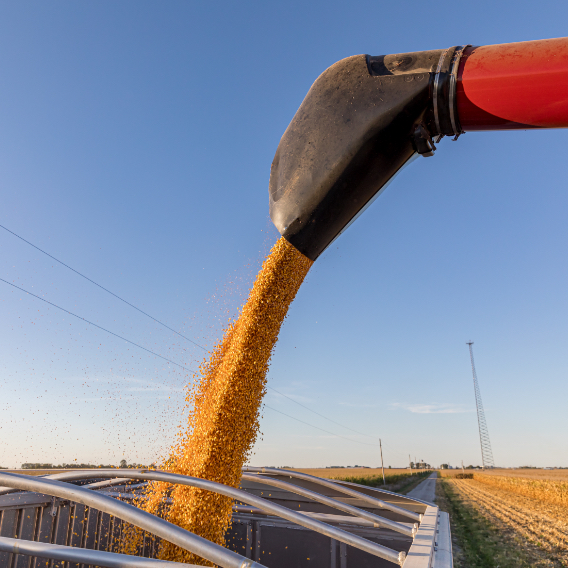 Closeup of combine harvester auger unloading corn