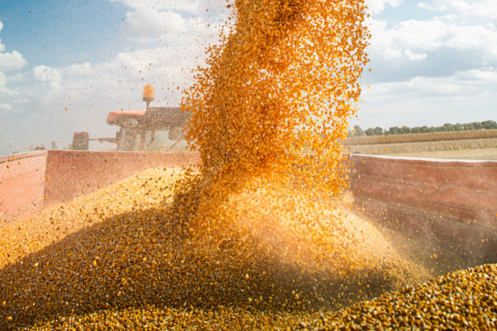 Grains being poured into truck
