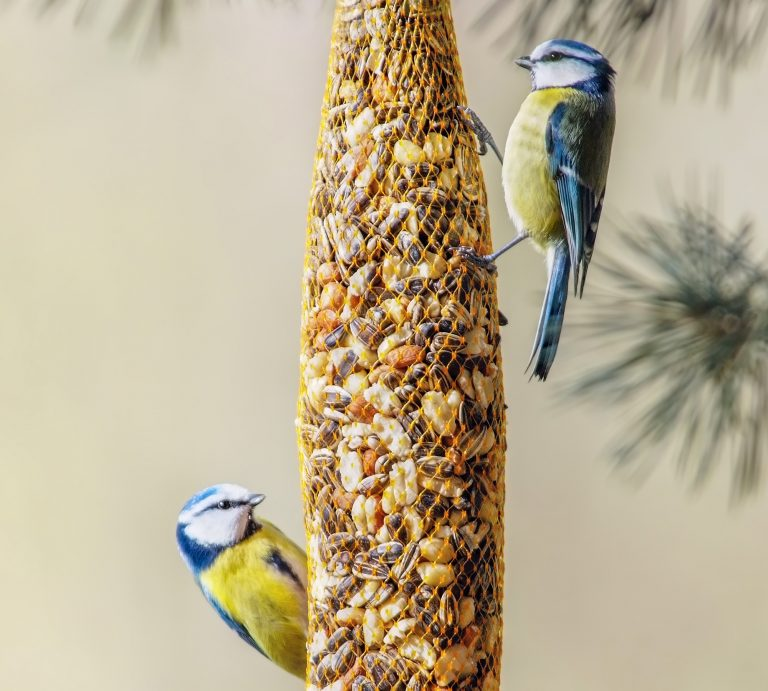 Birds eating a blend