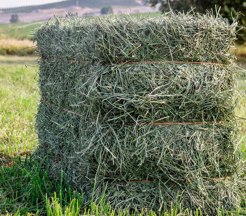 Alfalfa bail