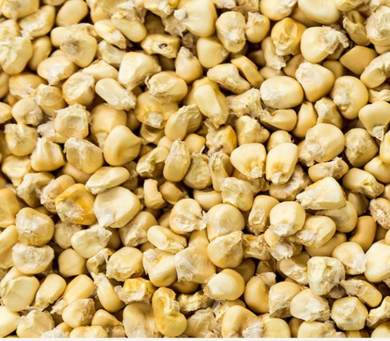 Waxy Corn
