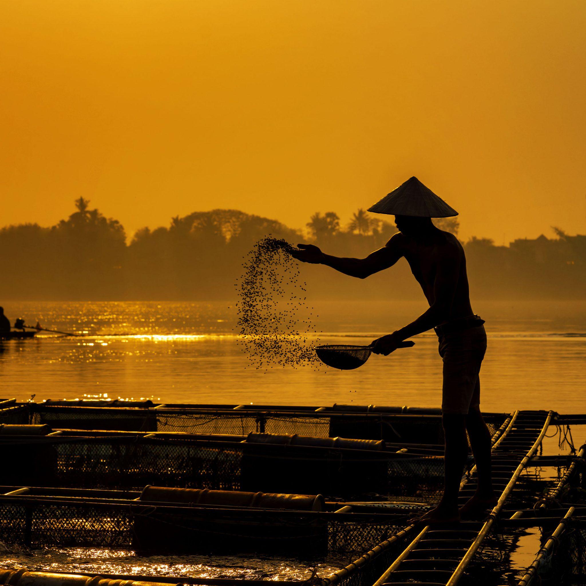 Feeding fish in a fish farm