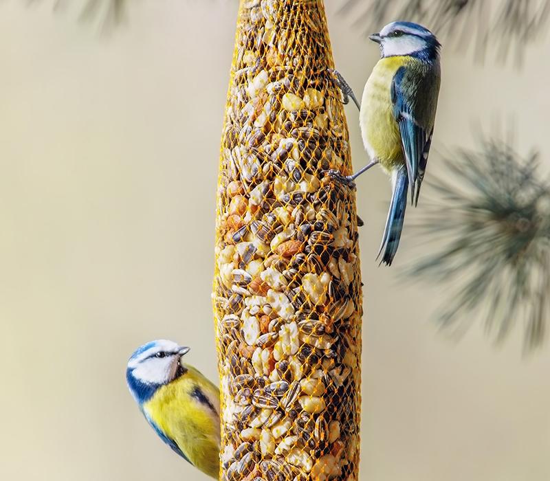 Birds eating a bird seed blend