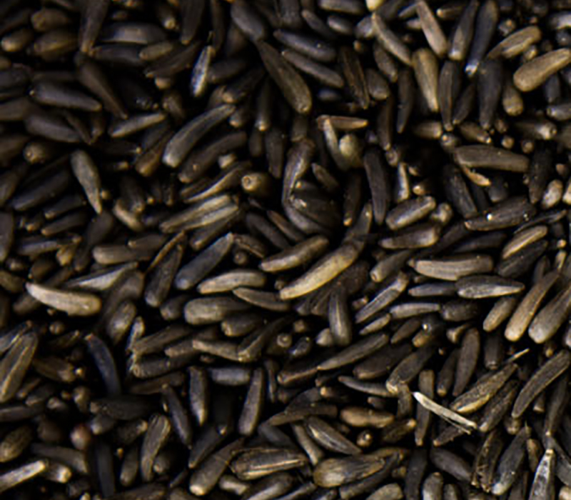 Nyjer seeds