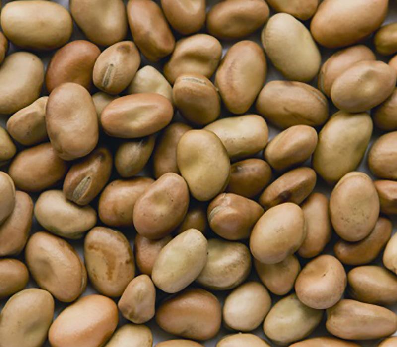 Faba beans