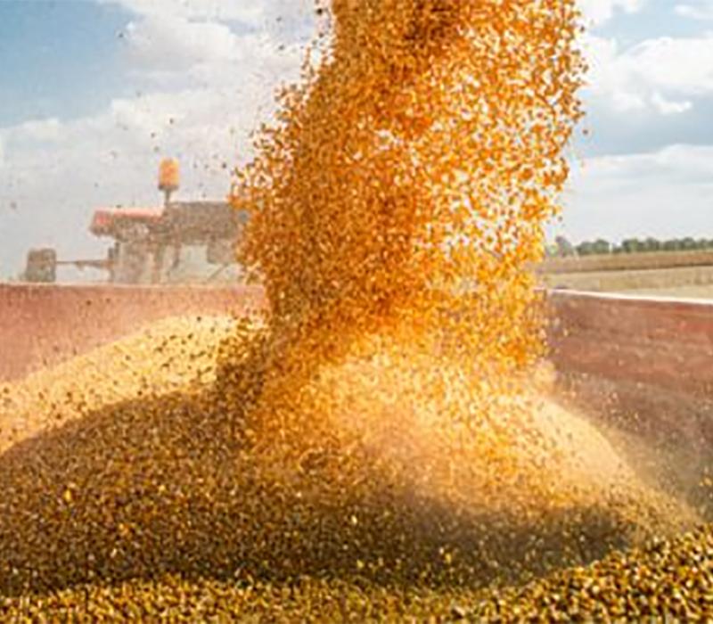Loading grain harvest into truck