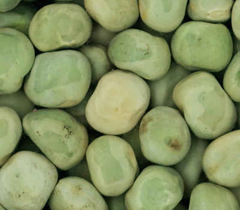 Marrow fat peas