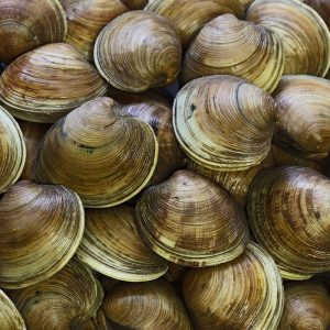 clam meal