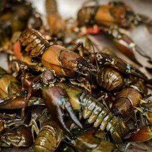 crawfish-meal.jpg