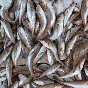 haddock meal