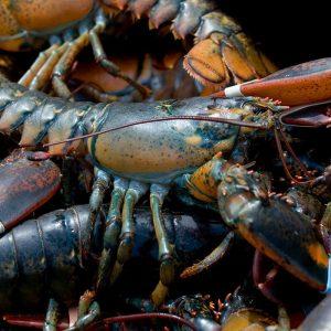 lobster-meal.jpg